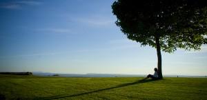 Îngerul şi copacul... (2)