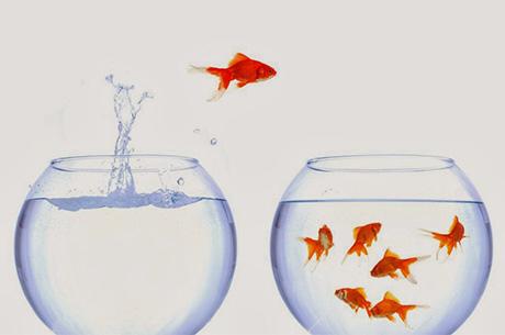 Consultanță și servicii resurse umane – Transferul de întreprindere